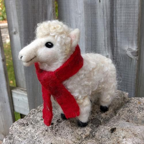 Sheep with scarf