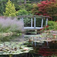 Rock_Garden_bridge_water_800px_wide